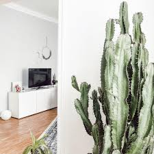 kaktus urbanjungle wohnzimmer pflanzen altbau