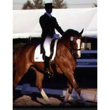 Finding Your Dressage Leg Expert Advice On Horse Care And Horse Riding
