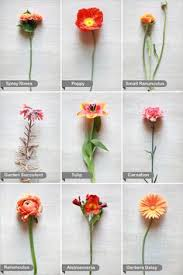 Wedding Flower Recipe Guide On Pinterest