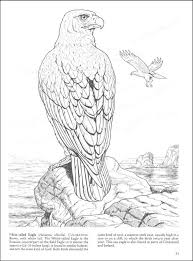 Birds Of Prey Coloring Pages 2 Book 002718 Details