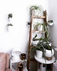 meine pflanzenecke im wohnzimmer schon toll was mit