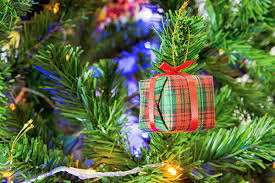 Nordmann Fir Christmas Tree Smell by Farmers Markets Denver Co Hatch Chiles Christmas Trees Delivery