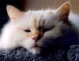 signs of worms in cats symptoms of worms in dogs and cats 1800petmeds