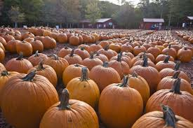 Hillcrest Farms Pumpkin Patch by Five Things To Do Besides Get A Pumpkin At These Patches