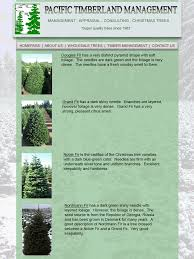 Nordmann Fir Christmas Trees Wholesale by Ptm Wholesale Trees