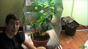 Grow Lamps For House Plants by How To Make The Cheapest Diy Grow Tent For Indoor Plants Youtube