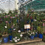 Petitti Garden Centers 22 s & 10 Reviews Home Decor