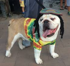 Old Westbury Gardens Dog Halloween by Pet Parade A Howling Success At Hicks Nurseries