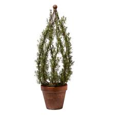 Slimline Christmas Tree by The Nursery U2014 Hortulus Farm Garden And Nursery