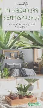 pflanzen im schlafzimmer vorteile nachteile und geeignete