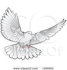 Dove flying drawing photo 21