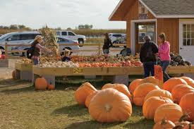 Northern Illinois Pumpkin Patches by Illinois Agritourism Attractions Patch Things Up