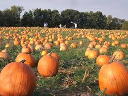 Dills Pumpkin Patch Columbus Ohio by Pumpkin Patch Hayrides Columbus Ohio