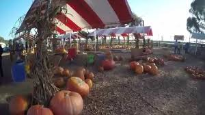Pumpkin Patch Animal Farm In Moorpark California by Prancers Pumpkin Village 2014 Youtube