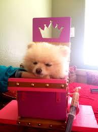 Bailey Chair Megaesophagus Instructions by 10 Best Megaesophagus Images On Pinterest Dog Stuff Border