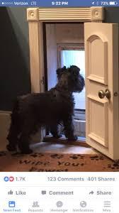 Pet Doors For Patio Screen Doors by Best 25 Security Door Ideas On Pinterest Safe Room Security