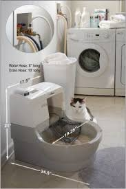 best cat litter boxes meet the instagram sensation omar the world cat