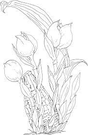 Tulipes Jaunes Dans Dessin Animé Vecteur Pour être Colorés Livre à
