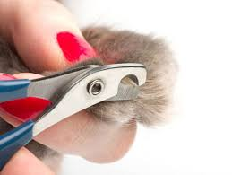 how to cut a cats nails nail clipping kingsway veterinary centre