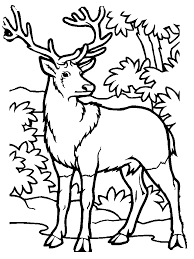 Full Size Of Coloring Pagedecorative Pages Deer Mule Buck Page Free Printable To