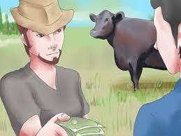 How to Raise Black Angus Cattle 8 Steps with wikiHow