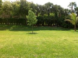 Florida Home Garden: Fruit Trees   My Garden Scenes Garden Design With Backyard Landscaping Trees Backyard Fruit Trees In New Orleans Summer Green Thumb Images With Pnic Park Area Woods Table Stock Photo 32 Brilliant Tree Ideas Landscaping Waterfall Pond Stock Photo For The Ipirations Shejunks Backyards Terrific 31 Good Evergreen Splendid Grass Scenic Touch Forest Monochrome Sumrtime Decorating Bird Bath Fountain And Lattice Large And Beautiful Photos To Select Best For
