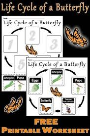 Life Cycle Of A Pumpkin Seed Worksheet by 3 Free