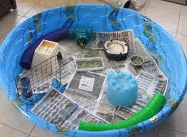 Pine Bedding For Guinea Pigs by Doggone Orlando 4 Types Of Guinea Pig Bedding What To Use And