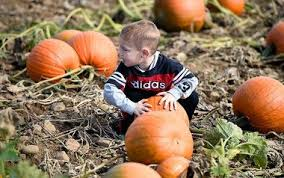 Tims Pumpkin Patch by Best Places To Pick Pumpkins In Central New York Syracuse Com