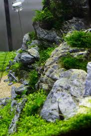 352 Best I | Aquascaping Images On Pinterest | Aquascaping ... 329 Best Aquascape Images On Pinterest Aquarium Ideas Floratic Visiting Paradise At Shah Alam Planted Aquarium Aquascape Things Aquariums Aquascaping Malaysia Diy Pertama Kali Aquascaping October 2010 Of The Month Ikebana Aquascaping World Sumida Aquarium Reloaded Fish Tanks And Designs Awesome A Moss Experiment Its All About Current Low Tech Tank Cuisine Wonderful Small Cubical Styles Planted The Surreal Submarine Amuse