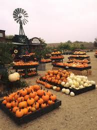 Pumpkin Patches Near Bakersfield Ca by Jack Creek Farms Pumpkin Patch U0026 Hay Maze California Haunted Houses
