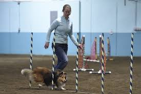 About Dog Agility And Other Dog Sports - BELL CREEK AGILITY ... Cloud Nine Dog Traing Best Houses In 2017 For Both Indoor And Outdoor Use Siberian Husky Costs Facts Infographic Ultimate Guide Farmer Tag Wallpapers Country Children Tractor Fields Farm Dogs Plastic Dog Barnhome Kennel Petshop Online 25 Food Bowls Ideas On Pinterest Project Food Cindee X Stackhouse Owyheestar Weimaraners News 614 Best Australian Cattle Images Blue Heelers 5 Facts About Dogs Deworming The Horse Owners Resource Lonely Escapes Yard To Get A Hug From His Friend Youtube Oakwood Park Morton6711