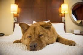 warum dein hund im bett schlafen sollte gründe dogbible