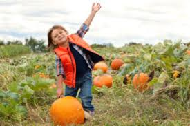 Best Pumpkin Patch Madison Wi by The Ultimate Haunted House Apple Orchard Pumpkin Patch Corn