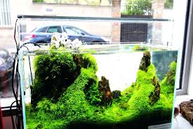 Guide To Aquascaping Guide To Aquariums World Of Water Appartment ... Planted Tank Contest Aquarium Design Aquascape Awards How To Create Your First Aquascaping Love Pin By Marius Steenblock On Pinterest The Month September 2008 Pinheiro Manso Creating Nature Part 1 Inspiration A Beginners Guide To Aquaec Tropical Fish Style The Complete Brief Progressive Art Of 2013 Xl Pt2 Youtube Aquadesign Dutch Sytle Aquascape Best Images On Appartment Iwagumi Der Der Firma Dennerle Ist Da Aqua Nano