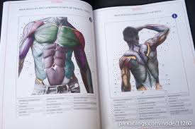 Book Review Anatomy For Sculptors Understanding The Human Figure Muscles