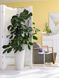 grünpflanzen für jeden wohnstil wohnzimmer pflanzen