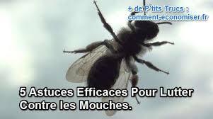 comment faire partir des moucherons dans une cuisine 5 astuces efficaces pour lutter contre les mouches