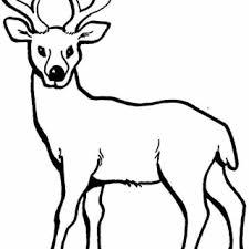 Mule Deer Buck Coloring Page Free Printable Pages Pagesdeer