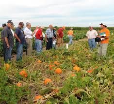 Columbus Ohio Pumpkin Patches by Ohio Pumpkin Crop Down This Year Expect Smaller Pumpkins Cfaes