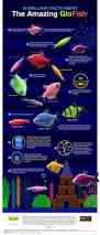 Spongebob Aquarium Decorations Canada by Best 25 Fish Tank Ideas On Pinterest Fish Tanks Amazing Fish
