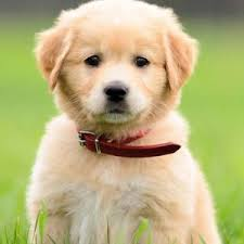 Cute Non Shedding Dog Breeds by Got Allergies These Hypoallergenic Dog Breeds Are Your New Best