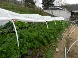 How To Build A Low Tunnel 484 Best Gardening Ideas Images On Pinterest Garden Tips Best 25 Winter Greenhouse Ideas Vegetables Seed Saving Caleb Warnock 9781462113422 Amazoncom Books Small Patio Urban Backyard Slide Landscaping Designs Renaissance With Greenhouse Design Pafighting Fall Lawn Uamp Gardening The Year Round Harvest Trending Vegetable This Is What Buy Vegetables Fresh And Simple In Any Plants Home Ipirations