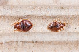 BED BUGS Advantage Termite and Pest Control