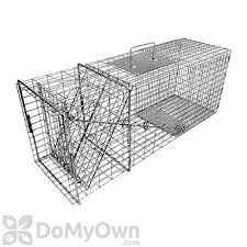 live cat trap tomahawk live trap for racoon feral cat sized animals model tlt108