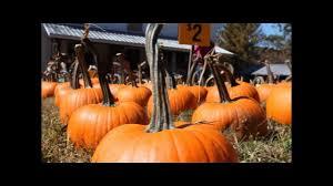 Pumpkin Farms In North Georgia by Bradley U0027s Pumpkin Patch Dawsonville Georgia Youtube