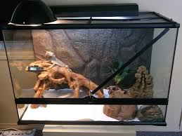 slate tiles for bearded dragons images and photos objects hit