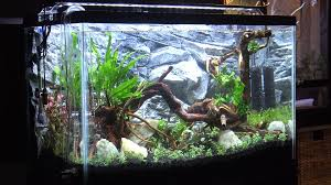 29 Gallon Freshwater Planted Aquarium Aquascaping & Setup (29G ... How To Set Up An African Cichlid Tank Step By Guide Youtube Aquascaping The Art Of The Planted Aquarium 2013 Nano Pt1 Best 25 Ideas On Pinterest Httpwwwrebellcomimagesaquascaping 430 Best Freshwater Aqua Scape Images Aquascape Equipment Setup Ideas Cool Up 17 About Fish Process 4ft Cave Ridgeline Aquascape A Planted Tank Hidden Forest New Directly After Setting When Dreams Come True