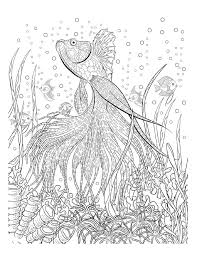 Various Oceana Adult Coloring Book Twenty Creative And Stress Relieving Pages F HD Images 2017 2018