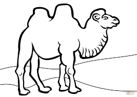 Click The Bactrian Camel Coloring Pages